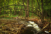 Cascading Framed Prints - Forest river Framed Print by Elena Elisseeva