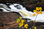 Rapids Prints - Forest river in the fall Print by Elena Elisseeva