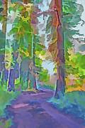 Steve Ohlsen - Forest Road - Color Splash 4