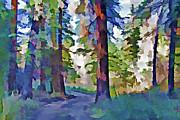 Steve Ohlsen - Forest Road - Color Splash
