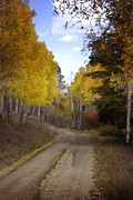 Fall Colors Digital Art Prints - Forest Road in Autumn Print by Ellen Lacey