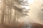 Reservoir Prints - Forest Road Morning Fog Print by John Burk