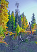 Clearing Mixed Media - Forest Rural Fence by Steve Ohlsen