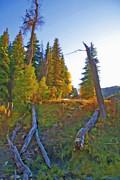 Steve Ohlsen - Forest Rural Scene