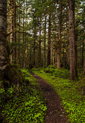 Northwest Photos - Forest Serenity Path by Mike Reid