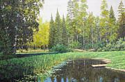 Aleksandr Volkov - Forest smal lake ...