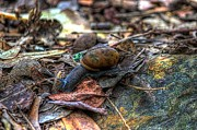 Forest Floor Photos - Forest Snail by Jay Eskridge