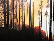 David Bartsch - Forest Sunrise