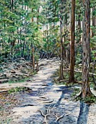 Tree Roots Painting Posters - Forest Trail Poster by Marilyn  McNish