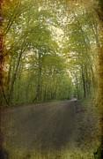 Forest Tranquility... Print by Nina Stavlund