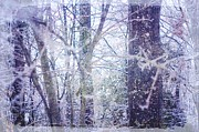 Suzanne Powers - Forest View In Snow and...
