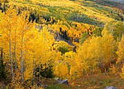 Juans Photos - Forests of aspen at Grand Mesa by Jetson Nguyen