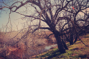 Bare Trees Metal Prints - Forever in My Heart Metal Print by Laurie Search