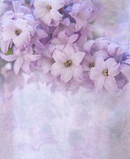 Hyacinth Photos - Forever More by Kim Hojnacki