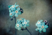 Aqua Flowers Framed Prints - Forget Me Not 01 - s22dt06 Framed Print by Variance Collections