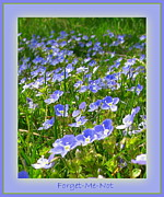 Leones Framed Prints - Forget Me Not Framed Print by Leone Lund