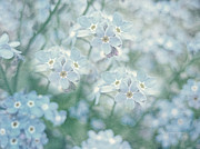 Blue Flowers Photos - Forget Me Not Lest You Be Forgotten by Zeana Romanovna