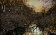 Wetland Metal Prints - Forlorn Metal Print by Robin-lee Vieira
