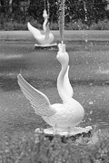 Forsyth Park Photos - Forsyth Park Fountain - Black and White 3 2X3 by Carol Groenen