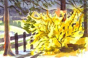 Water Colors Painting Originals - Forsythia in Springtime by Kip DeVore