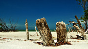 Golf Of Mexico Prints - Fort Desoto Stumps Print by John Rush