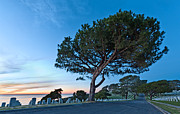 Fort Rosecrans National Cemetery Print by Alexis Birkill