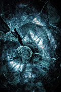 Swirling Prints - Fossil Blue Abstract Print by Edward Fielding