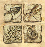 Jq Painting Framed Prints - Fossils Framed Print by JQ Licensing