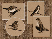 Wren Drawings - Four Birds In Charcoal by Joyce Geleynse