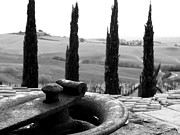 Brunello Prints - Four Cyprus in Montalcino Print by Leslie Lovell
