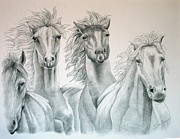 Wild Horses Drawings Originals - Four for Freedom by Joette Snyder
