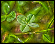 Lisa Sorrell - Four Leaf Clover