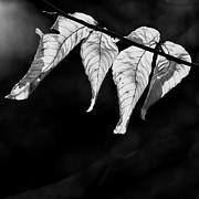 Nathan Larson - Four Leaves
