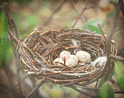 Haze Art - Four Nest Eggs by Suzanne Barber