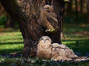 Nick  Biemans - Four owl chicks in a dark forest