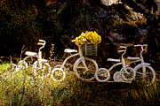 Tricycle Prints Posters - Four White Tricycles Poster by Peggy Collins