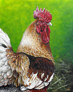 Barnyard Animal Paintings - Fowl Foreign - Garth by Cara Bevan