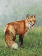 Fox  Print by David Stribbling