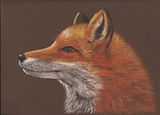 Fox Pastels Prints - Fox Print by Nina Shilling