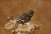 Sparrow Mixed Media - Fox Sparrow by Susan Schwarting