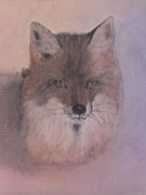 Stephen Thomson - Fox
