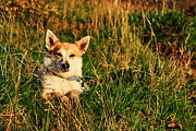 Best Friend Photos - Fox Terrier In Landscape by Aidan Moran