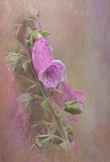 Foxglove Photos - Foxglove by Angie Vogel