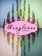 Foxglove Flowers Digital Art Posters - Foxgloves Times 4 Poster by Margaret Newcomb