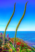 Succulents Framed Prints - Foxtails on the Pacific Framed Print by Jim Carrell