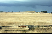 Split Rail Fence Photos - Foxy Horizon by Marie Jamieson
