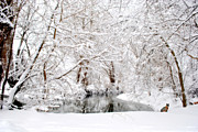 Snow Scenes Photo Prints - Foxy Snow Print by Emily Stauring