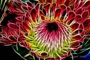 Fractal Protea Print by Michael Durst