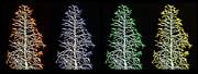 Fractal Seasons - Inverted Tetraptych Print by Steve Ohlsen