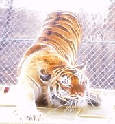 Tiger Fractal Photos - Fractal Stretching Tiger by Deniece Platt